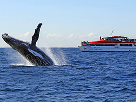 Whale Watching, Sydney - NSW