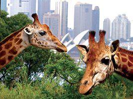 Zoo Express Cruise with Sky Safari Cable Car, Sydney - NSW
