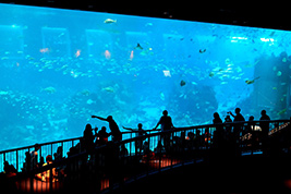 S.E.A Aquarium One Day Pass with Transfer, Singapore