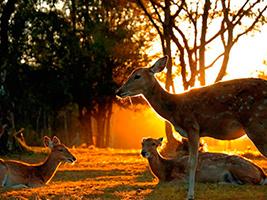 Chiang Mai Night Safari - ticket only, Chiang Mai