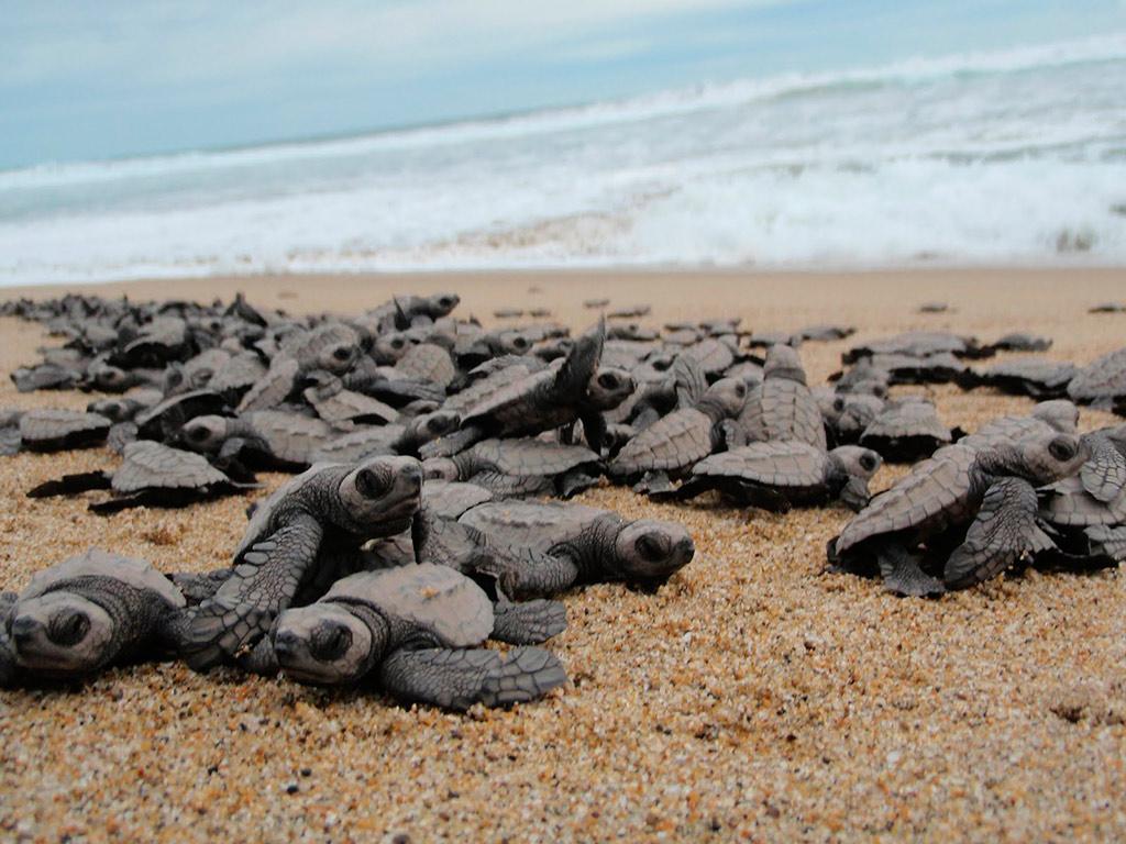 Excursão Ecológica: Proteção das Tartarugas