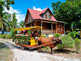 Full Day Bus Tour Mage, Seychelles Island