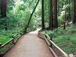 Muir Woods Tour, San Francisco Area - CA
