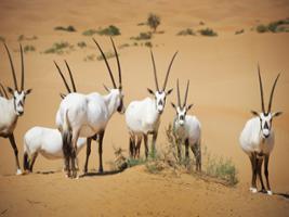 Heritage Desert Safari, Dubai