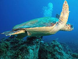 Scuba Diving in Kalkan, Kalkan