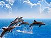 Dolphinarium Show Entry Ticket