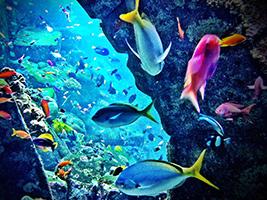 Aquaventure and Lost Chambers, Dubai