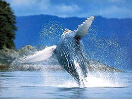 Whale Watching Tour, Punta Cana