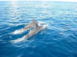 Dolphin Tour, Zanzibar