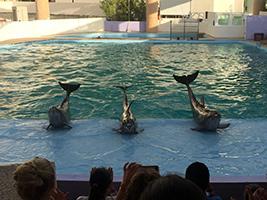 Interactive Aquarium Cancun, Cancun (and vicinity)