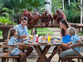 Half Day Breakfast with Orangutan, Bali