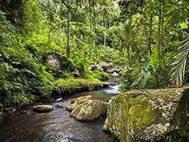 Bayad Eco Treks - Half Day Tour, Bali