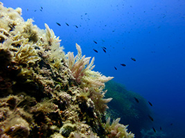 Snorkelling Trip, Majorca