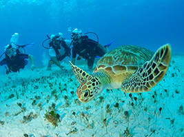 PADI Refresher Course, Cancun (and vicinity)