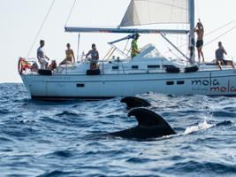 Mola Mola Boat Trip - without transfers, Tenerife