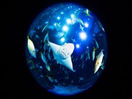 Programok/Leírások Idegen Nyelven Poema Del Mar Aquarium