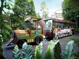 Park Hopper (Zoo, Jurong Bird Park, River Safari , Night Safari) and Tram Ride, Singapore