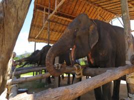 Half Day Elephant Seaside Retreat, Khao Lak and Phang Nga