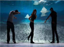 National Geographic Encounter: Ocean Odyssey, New York Area - NY
