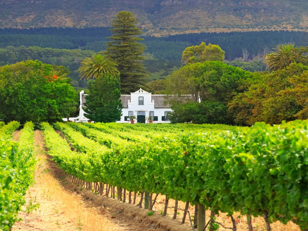 Full Day Constantia Wine Tour - Private