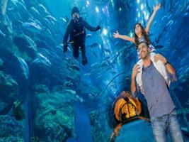Dubai Aquarium and Under Water Zoo with Transfer, Dubai