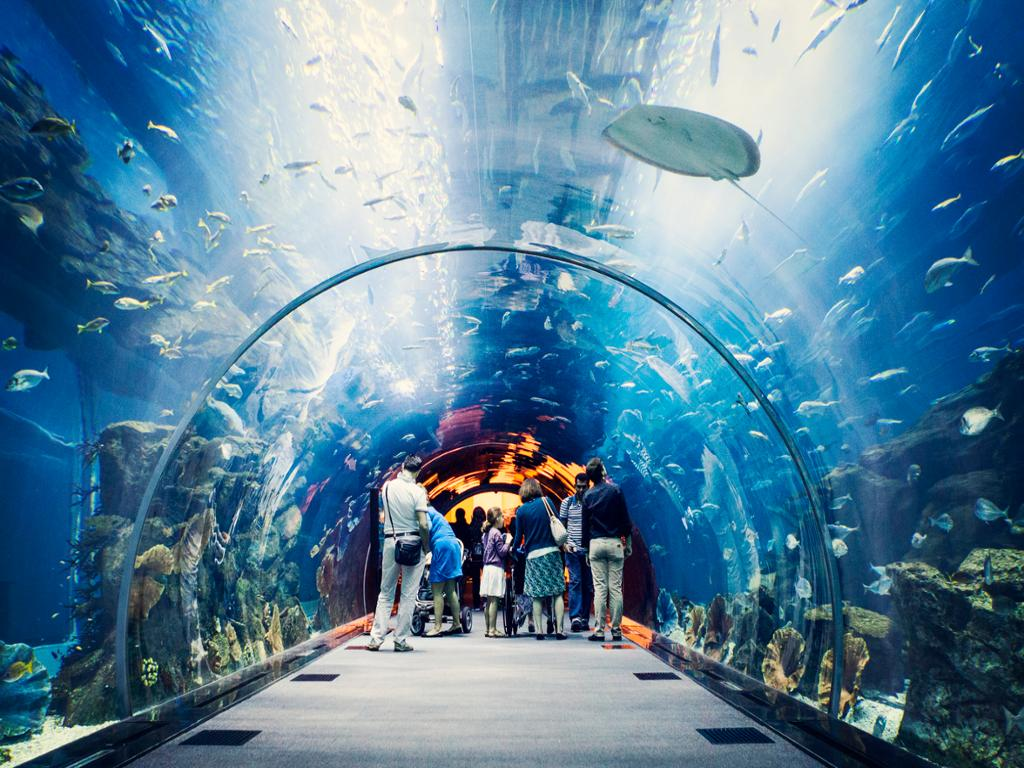 Dubai Aquarium And Under Water Zoo With Transfer | Hotels, Cars &  Activities - WISE.travel