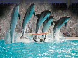 Dolphin Show Regular with Transfer, Dubai