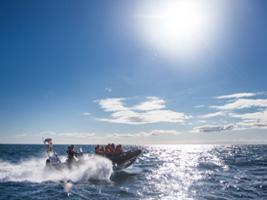 Premium Reykjavík Whales and Puffins Tour, Reykjavik