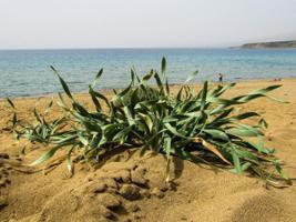 Akamas Peninsula Tour, Cyprus
