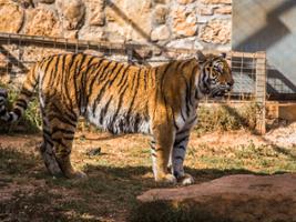 Paphos Zoo, Cyprus