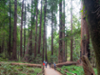 Muir Woods and Sausalito Half Day Tour