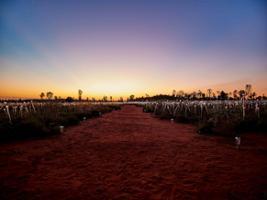 Uluru Sunrise & Field of Light, Uluru-Ayers Rock - NT