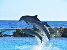 Willemsted City Tour with Dolphin Show, Curacao