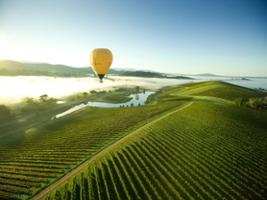 Transfer to Yarra Valley Winery Tours, Melbourne - VIC