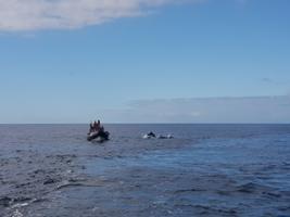 Dolphin Watching - Lisbon Boat Tour, Lisbon