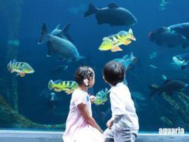 Aquaria + Trick Eye, Phuket