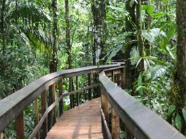 Cinco Ceibas + Adventure Park – from San Jose, San José / Central Valley